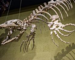 モササウルス 海 恐竜