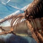 シャチとモササウルスの骨格の違いについて