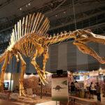 スピノサウルスお化石の値段ってどれくらい!?