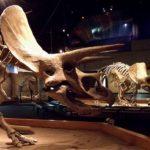 トリケラトプスの角の大きさや特徴について