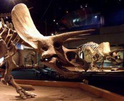 トリケラトプス 角 大きさ