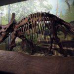 トリケラトプスはサイの先祖!?大きさの違いとは?