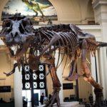 ティラノサウルスの骨の数ってどれくらいあるの!?