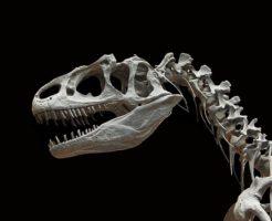アロサウルス ティラノサウルス 違い