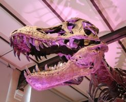 ティラノサウルス 前足 役割