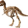 ティラノサウルス 前足 指