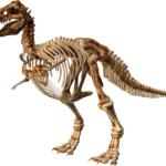 ティラノサウルスの前足の足と手の指の数は何本!?