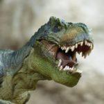 ティラノサウルス「スー」の大きさや特徴について