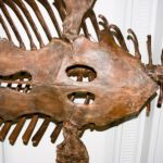 モササウルスの歯の特徴。大きさや数はどれくらい!?