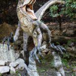 ヴェロキラプトルの爪の化石の特徴や値段について