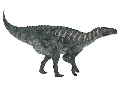 イグアノドンの化石から見る生息地について   恐竜の教科書