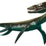 プレシオサウルスの歯の化石について。販売価格はどれくらい?