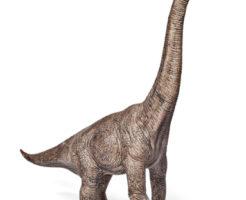 ブラキオサウルス 首 回らない