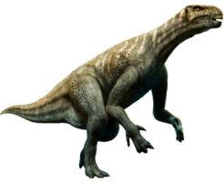 イグアノドン 恐竜 親指