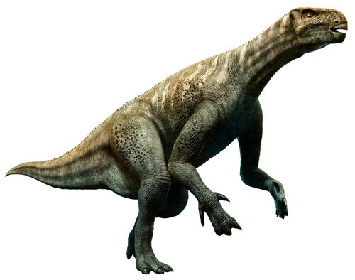 恐竜イグアノドンの特徴。親指はどのように使ってたの?   恐竜の教科書